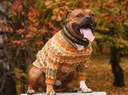 Конкурс нарядов для собак пройдёт в Рыбнице