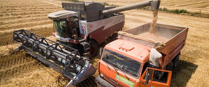 Уборка озимой пшеницы на стадии завершения