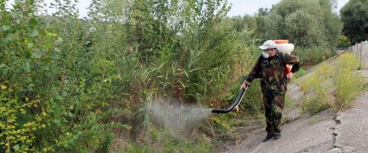 В Рыбнице прошёл очередной этап борьбы с комарами