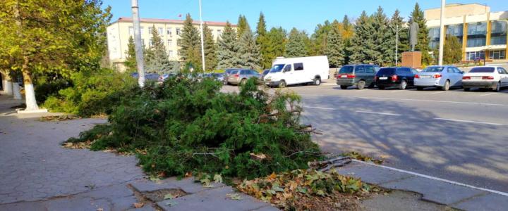 На центральной улице города появятся молодые деревья