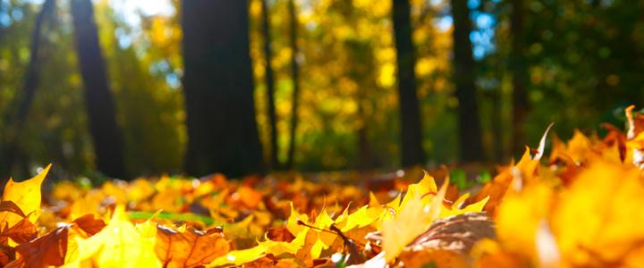 Информация об утилизации опавшей листвы