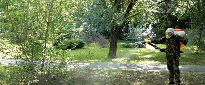 В Рыбнице и в селах района проводится дезинсекция от клещей