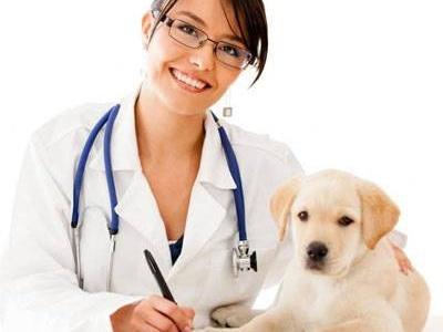 Поздравление главы госадминистрации с Днём ветеринарного работника